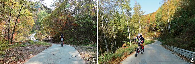1 단풍 터널을 이룬 빙골 임도 2 자작나무 숲을 관통하는 어론리 임도