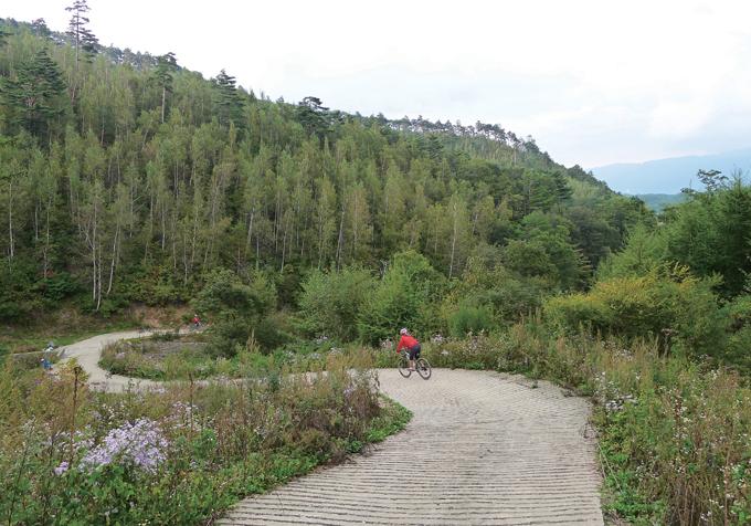 한강의 지류인 골지천 원류가 되는 해봉골로 내려가는 길. 푸른 숲 사이에서 자작나무 숲이 하얗다.