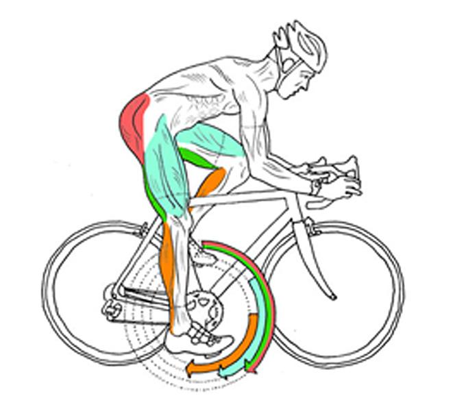 그림6. 페달링각도에 따라 주로 사용되는 근육의 위치