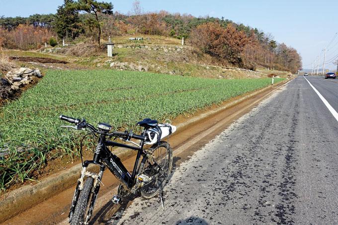 남도의 겨울은 파란 마늘밭에서 깊어간다(함평 학교)