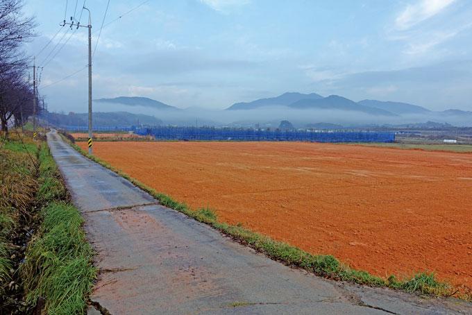 황토는 색깔의 설명이 필요 없다. 검붉기도 해서 더 기름져 보이는 땅이다(장성 삼서)