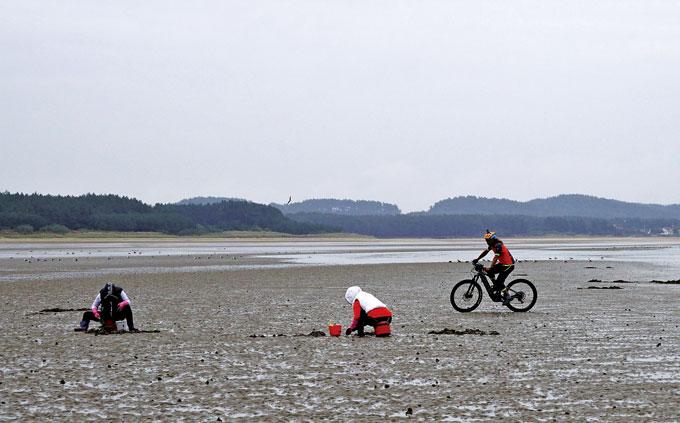 몽산포해변에서 조개를 캐는 아낙네.